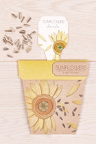 Sow seeds  sunflowers small2